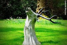 Tree stump / by James Croft