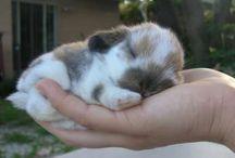 Rabbit / Mondo coniglio!!
