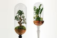 Interior gardens / Collection interior gardens combines XIX century design (Nathaniel Wardian victorian terrariums) and modern solutions. Material: wood, glass, plants