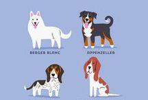 Infographics / Διάφορα infographics και άλλες πληροφορίες, σχετικά με σκυλιά... Πάντα!