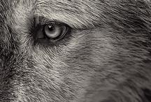 Amazing Greys / by Gillian Newberry