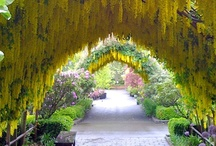 Gardens / Gardens, gardening, flowers, trees, architecture, water.