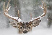 * w i n t e r * w h i t e * / Winter inspiration