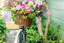 bicycles + carts