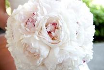Wedding Decor / by Britanny Mortimer