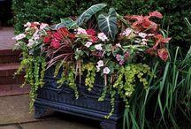 Garden / Garden, gardening, ideas for gardening, tips for gardening.  / by Tanya Dalton