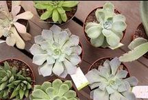 houseplants / Houseplants bring life into a room and can even purify the air and increase humidity. At our three year round locations, we carry a full selection of both flowering and foliage houseplants.  McDonald Garden Center