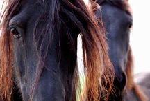 For the love of Horses / by Sandy Rhodehamel