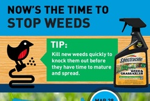Spring Pinfographics / Get started on spring with tips from preventing crabgrass to growing flowers. No matter where you are in the country, our pinfographics will keep you up to speed on what you need to be doing in your yard for spring!