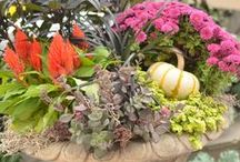 fall garden refresh / Fresh new arrivals for a fresh new season! From asters, mums and ornamental peppers... you'll find a large variety of the best plants to get your fall in full bloom.