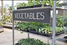 veg out! cool weather edibles / With the arrival of cooler temperatures there are lots of vegetables that will help you continue your veggie garden and and allow you to enjoy a homegrown harvest this fall.