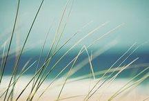 Seaside / Sea / summer / beach / sand / wind / shore / stones / gulls