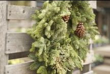 a fresh-cut Christmas / Bring home natural beauty and the scents of Christmas with fresh-cut greens and trees.