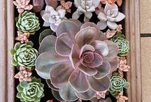 succulent style / Bring home style with succulents! Take a peek at our favorite succulent pics from our stores and from around Pinterest. Growing tip: Remember, succulents like it sunny!