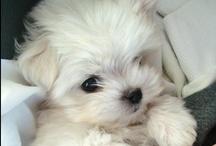 Cute Pets / by Shapely Chic Sheri - Curvy Fashion Blog