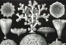 Flora & Fauna Illustrations / Vintage / by Michaela Grundova