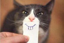 .<. Cats .>. / by Lauren Michelle