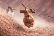 DOGS RULE / Anything & Everything Dogs! / by Krista Droop Marketing