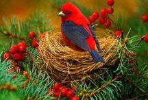 Birds / by Del Jeanne Mathews