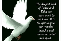~ PEACEFUL LOVE DOVES ~ / Doves, Beautiful and graceful..A sign of love and peace.