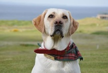 Fairmont Pets: Canine Ambassadors / Fairmont Hotels offers a distinctive service at select hotels: resident hotel dogs known as Canine Ambassadors. Take one for a walk, give a cuddle or just bask in the cuteness. / by Fairmont Hotels & Resorts