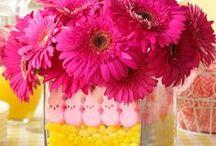 Easter / Bunnies!! / by Sabrina Eckley