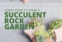 Succulents DIY / Learn and get inspiration from all these amazing tips for doing your own succulent DIY projects! || Find out about topics such as: watering succulents, succulent soil, succulent DIYs, succulent garden inspiration, succulent weddings, growing succulents indoors, propagating succulents and more!