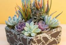 Indoor Succulents / Learn all about indoor succulents and the proper care methods to keep them happy and healthy! || Find out about topics such as: watering succulents, succulent soil, succulent DIYs, succulent garden inspiration, succulent weddings, growing succulents indoors, propagating succulents and more!