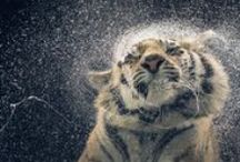 Wild.!!
