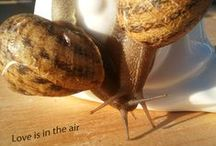 A life of snail / This board tells through images the different moments of life of snails.