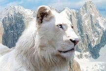 Beautiful Animals / by R. Healey