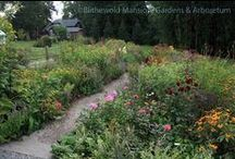 The Cutting Garden / by Blithewold Mansion, Gardens & Arboretum