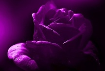 Purple / by R. Healey