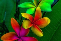 Colorful / by R. Healey