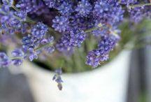 Let my garden grow! / by Toni Chapman
