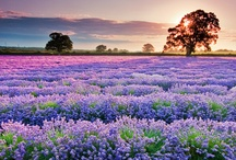 Purple Surrounds / Purple:shades between red and blue; Purple is the color of good judgment. It is said if you surround yourself with purple you will have peace of mind ...  / by Rebecca Leftwich
