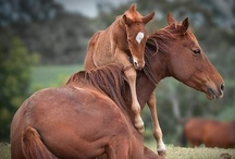 "All About Horses / ""A horse is the projection of peoples' dreams about themselves—strong, powerful, beautiful—and it has the capability of giving us escape from our mundane existence."" —Pam Brown"