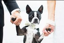 Pets at the Wedding / Including your four legged family on your special day, from formal attire to great photo ideas.  / by Beatriz Ball Collection