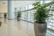 Indoor Plants Modern Design / Gorgeous live plants in modern design and modern/contemporary containers