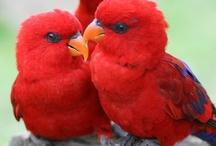 BIRDS / by Mary Peth