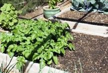 Small space gardening / Information for all types of small space gardening.  Includes Container gardening, patio gardening, square foot gardening, raised bed gardening, herb gardening, and more.