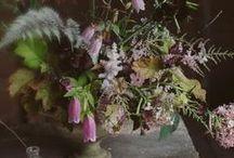flowers / by Wild Folk Studio