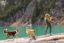We Bring Our Dogs / Going on an adventure? We love to bring our dogs. Here are some images that showcase adventures with your dog!