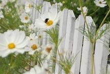 Garden / by Martie