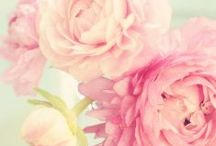 Floral Fantasy / by Nicole Tylka