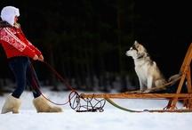 Dogs / by Tilley Allen