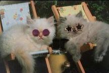 koty- śmieszne / zabawne, śmieszne zdjęcia kotów