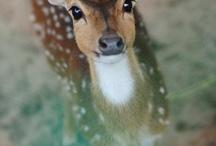 Cute animals :):) / by Lauren Dzierbicki