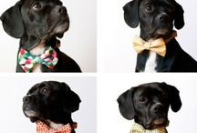 Furry Family / - because when you don't have kids, your dogs are your world - / by Nicole Maywright