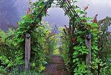 garden / by Sasha Smith